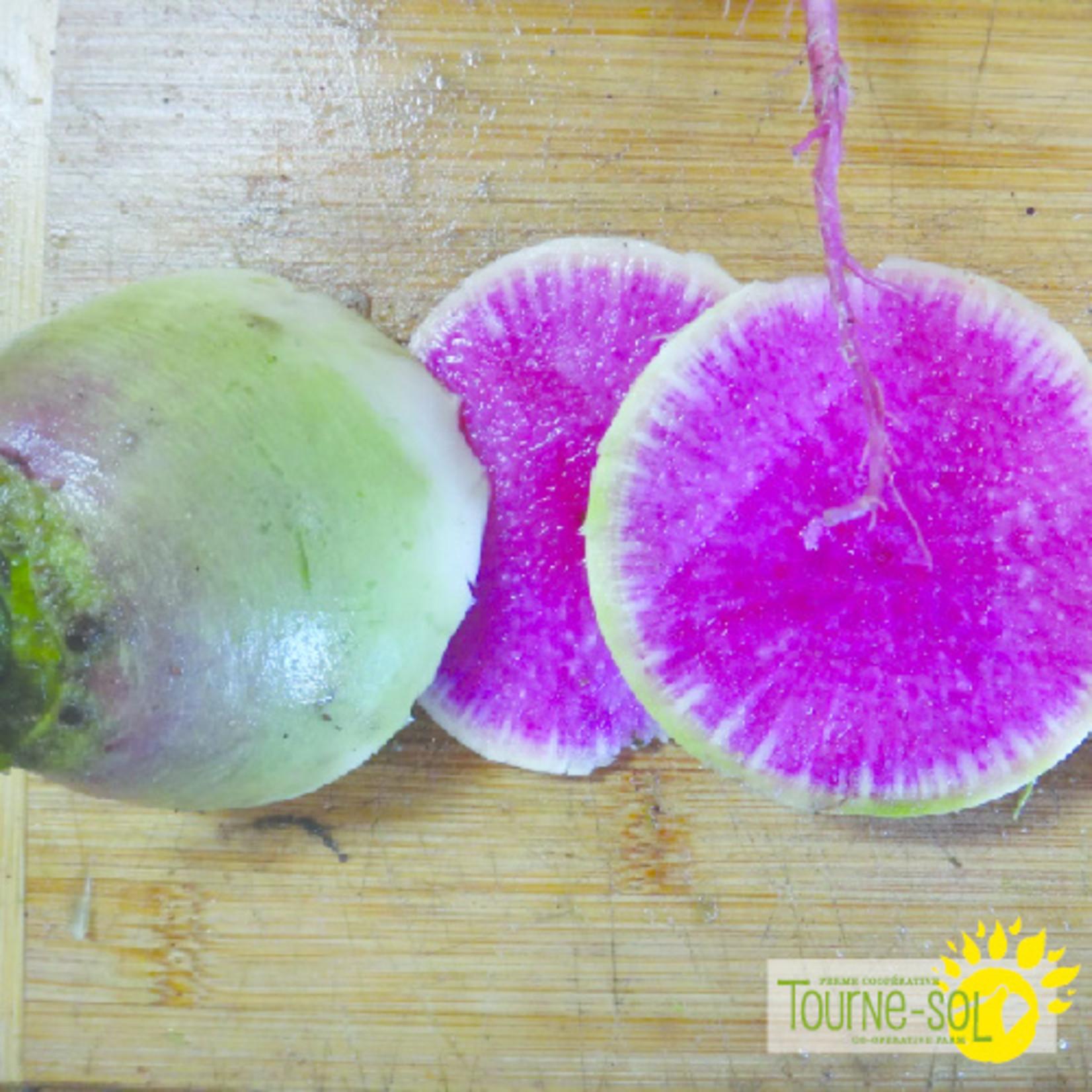 Tourne-Sol Radis Melon d'Eau