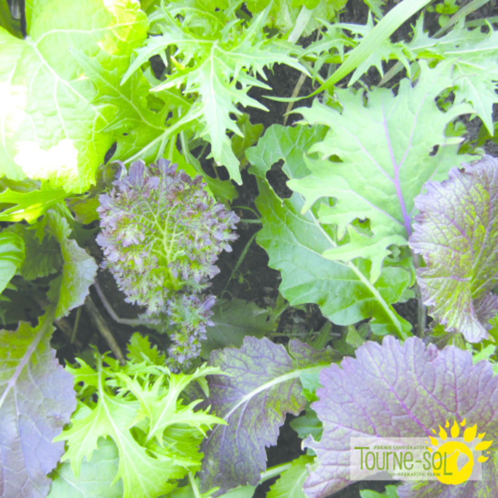 Tourne-Sol Deluxe brassica blend mesclun