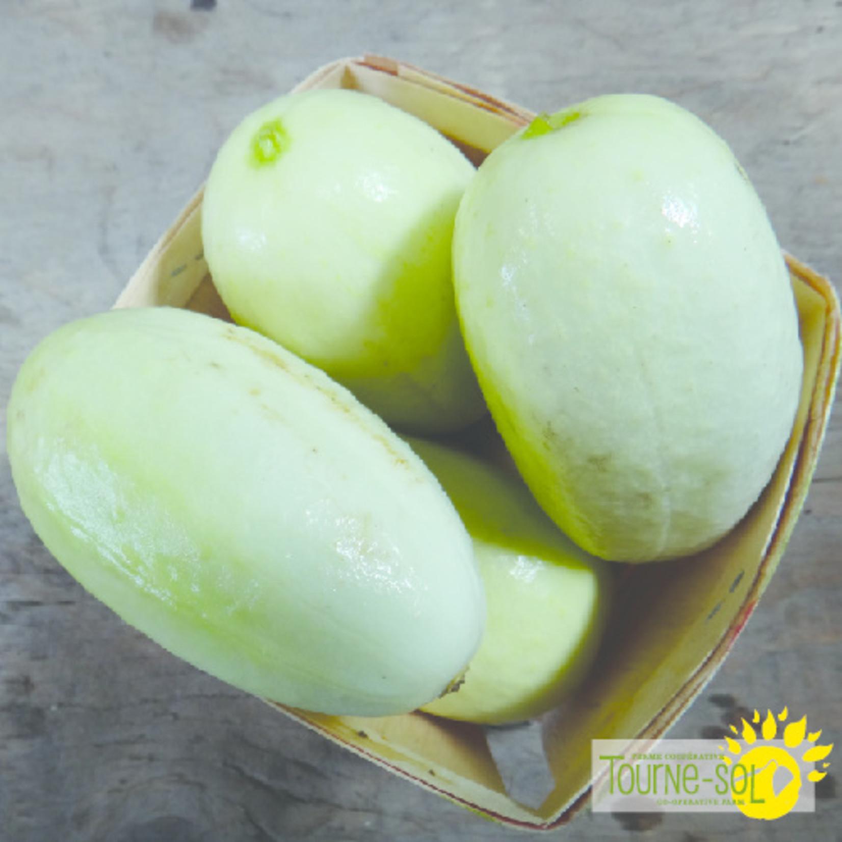 Tourne-Sol Dragon Egg cucumber