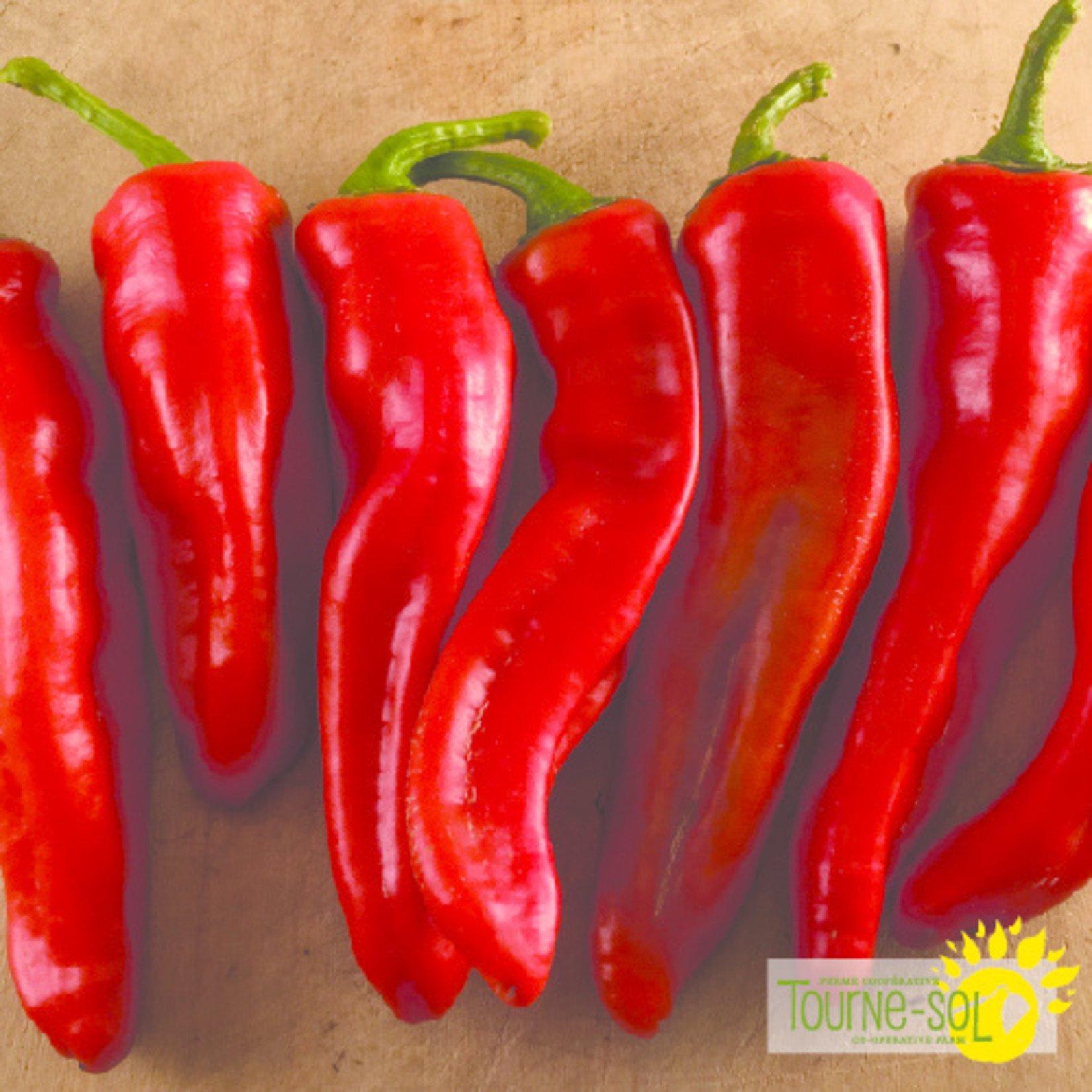 Tourne-Sol Georgia Flame hot pepper