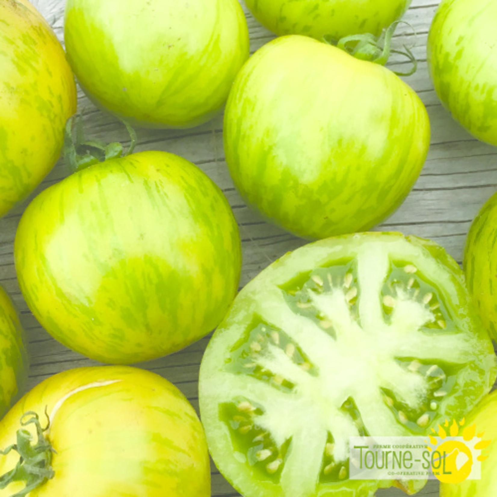 Tourne-Sol  Green Zebra green tomato