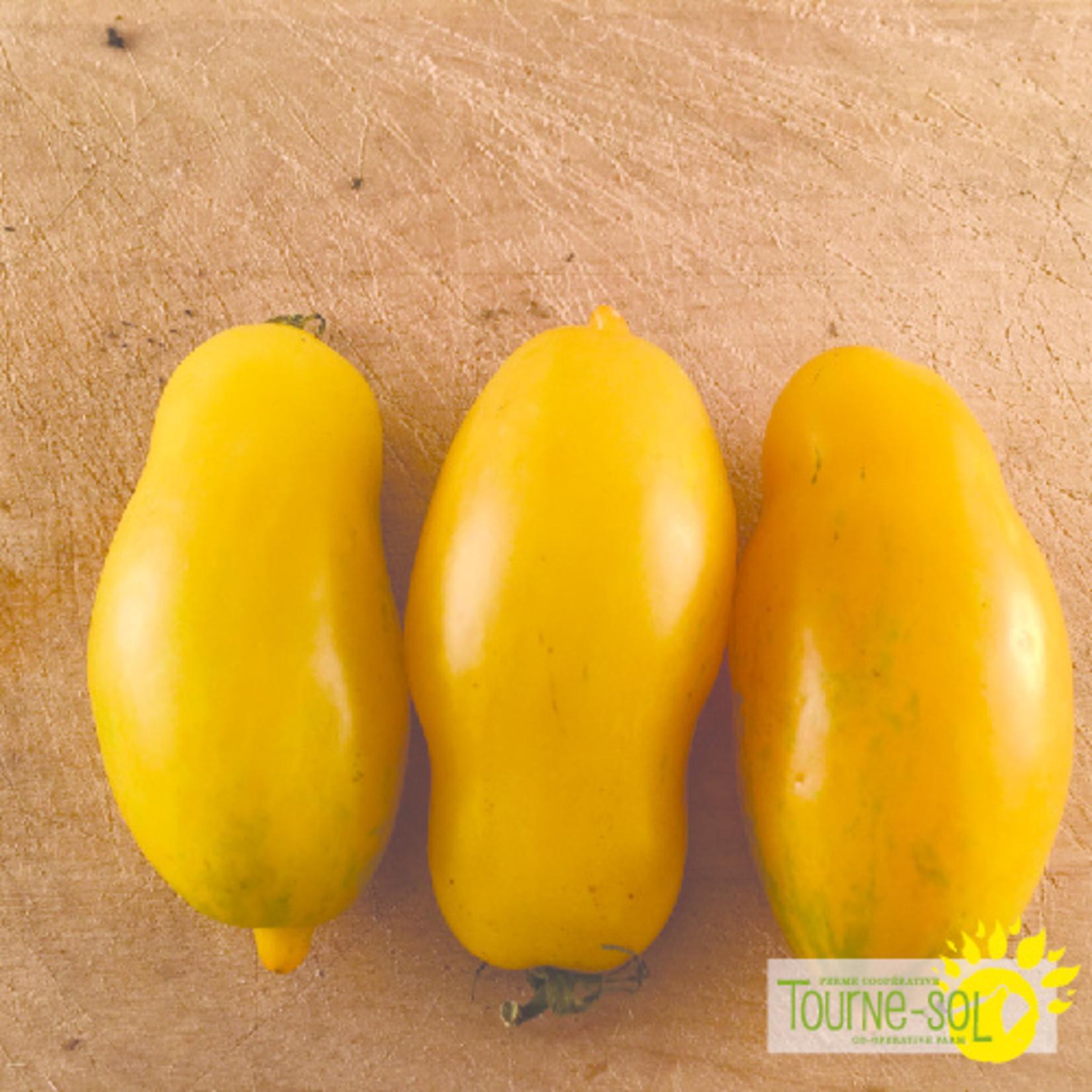 Tourne-Sol Banana Legs yellow paste tomato