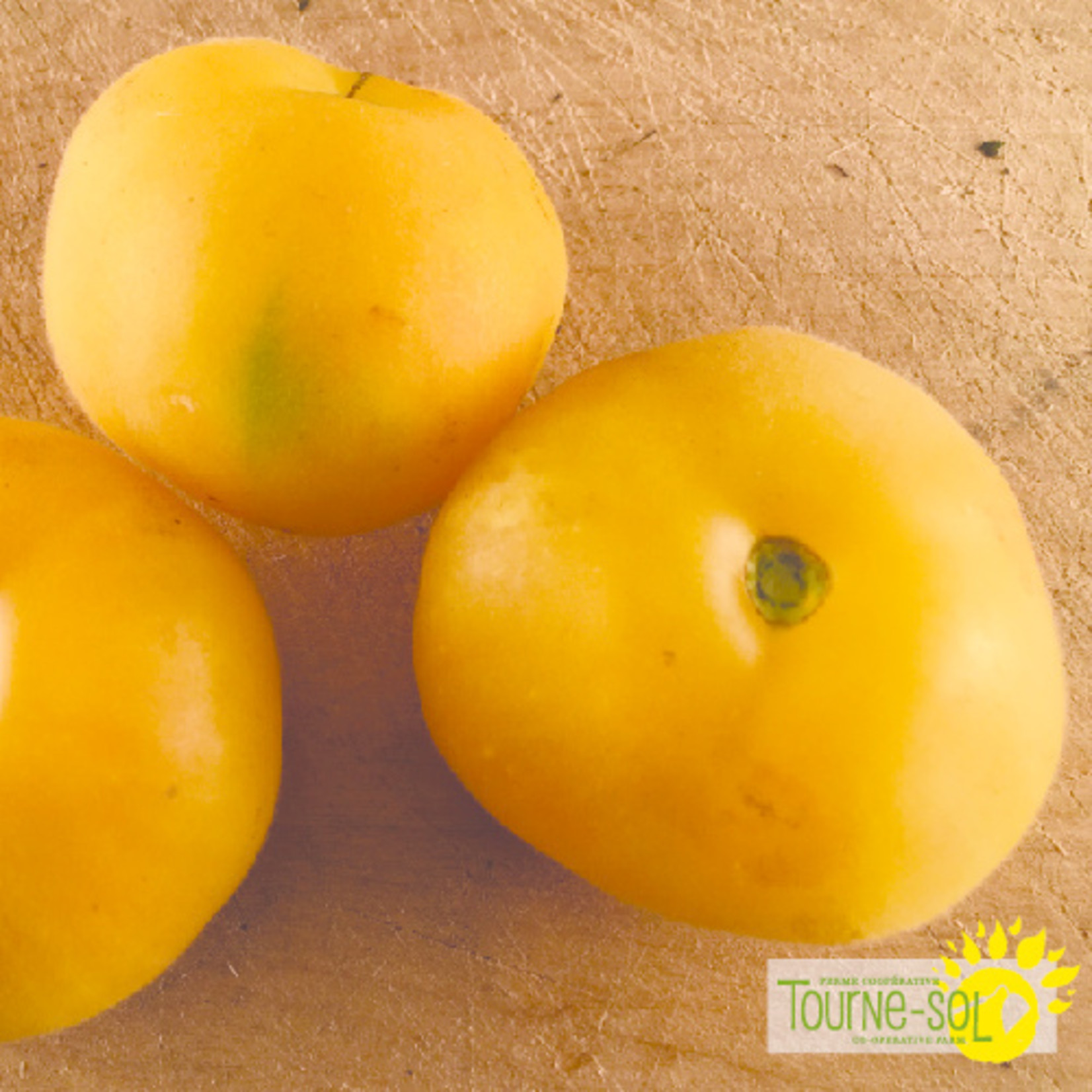 Tourne-Sol Tomate Jaune Wapsinicon Peach