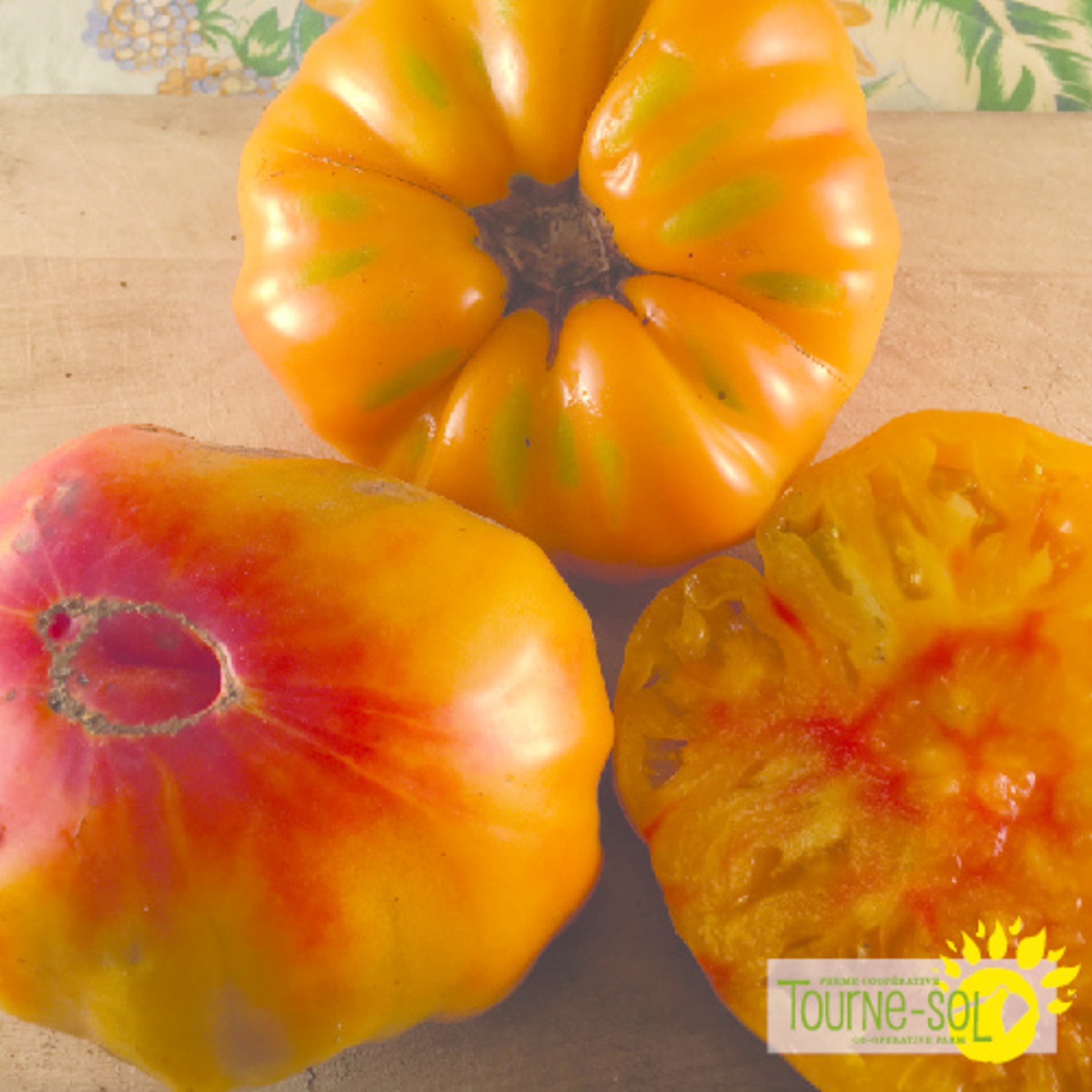 Tourne-Sol Striped German orange tomato