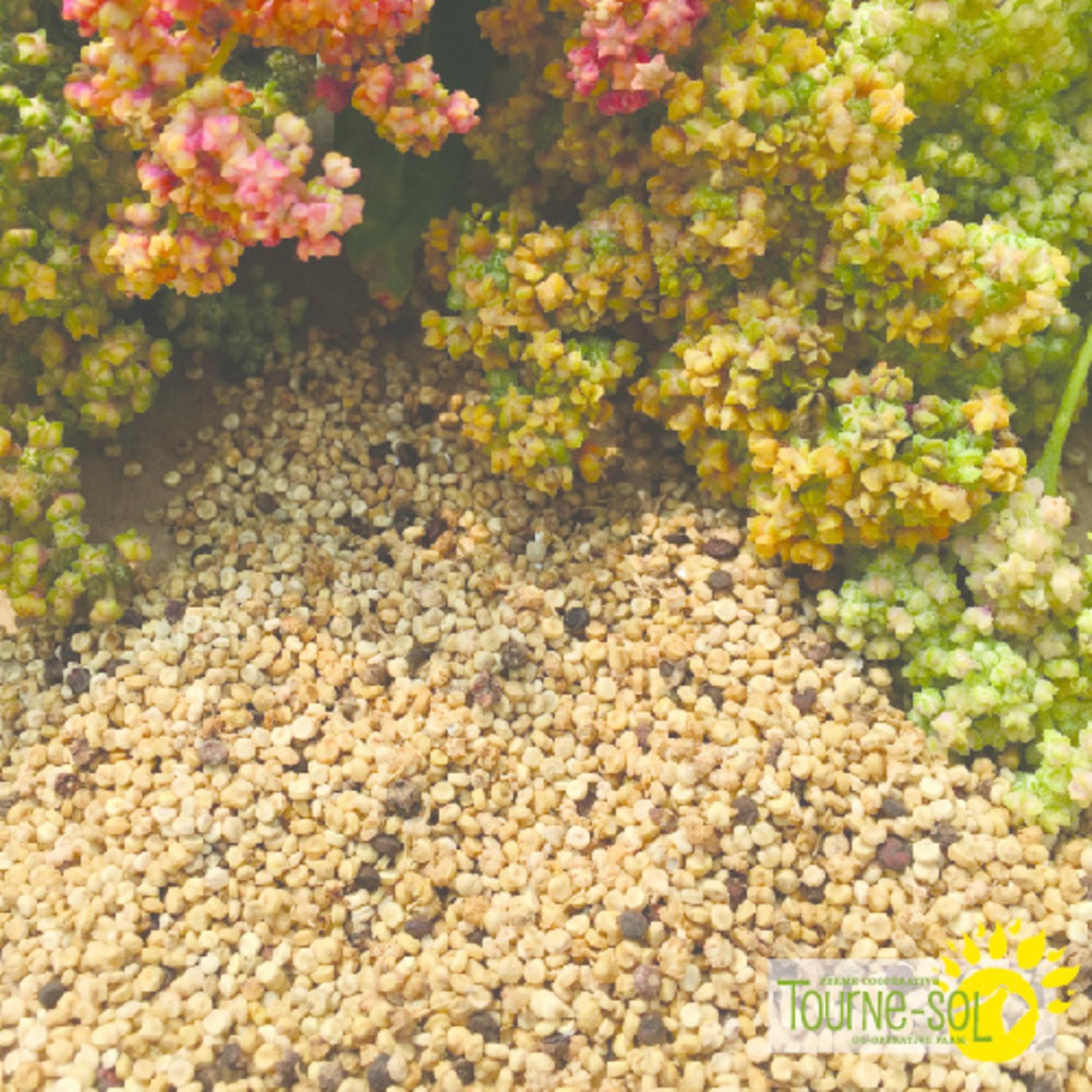 Tourne-Sol Rainbow quinoa mix