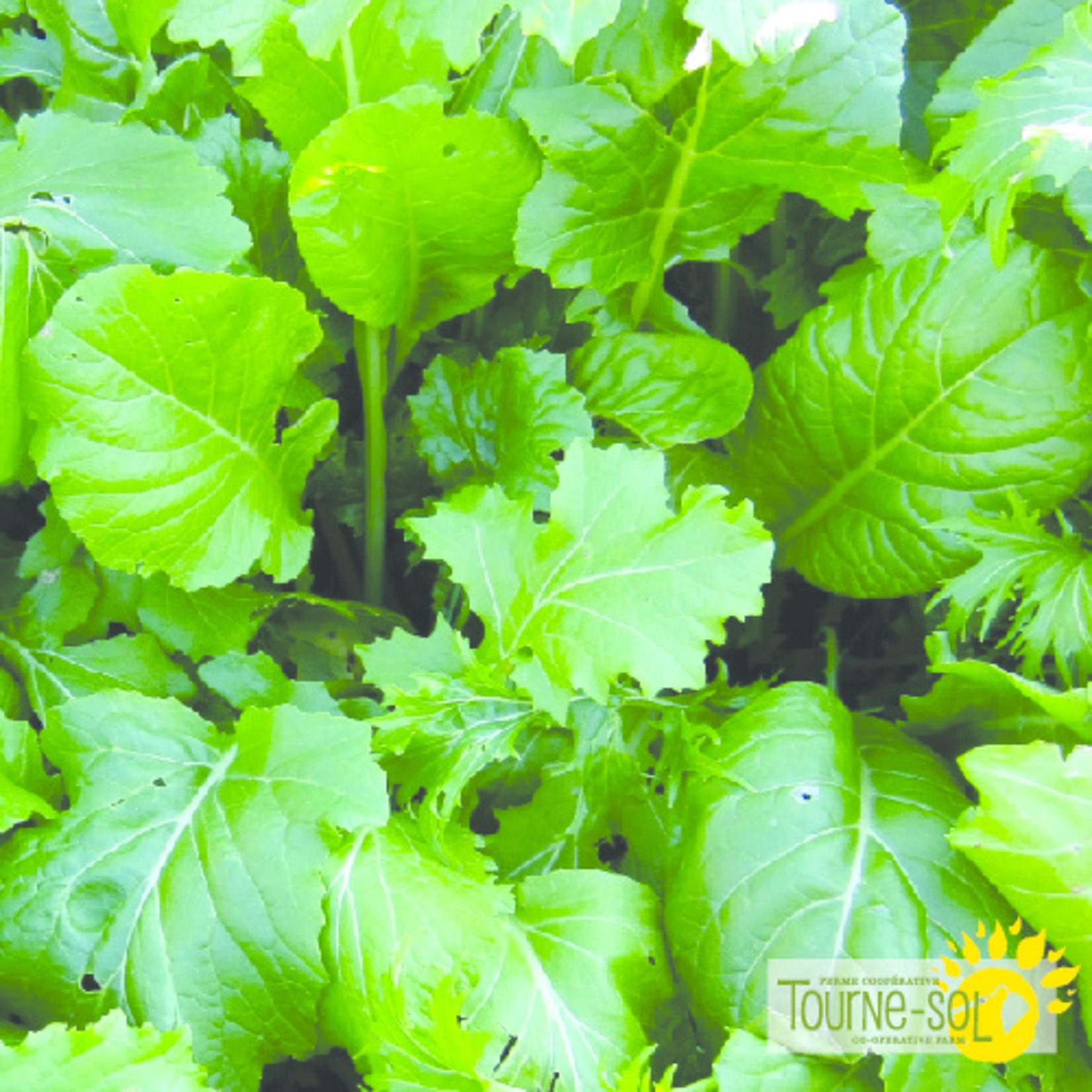Tourne-Sol Basic brassica blend mesclun