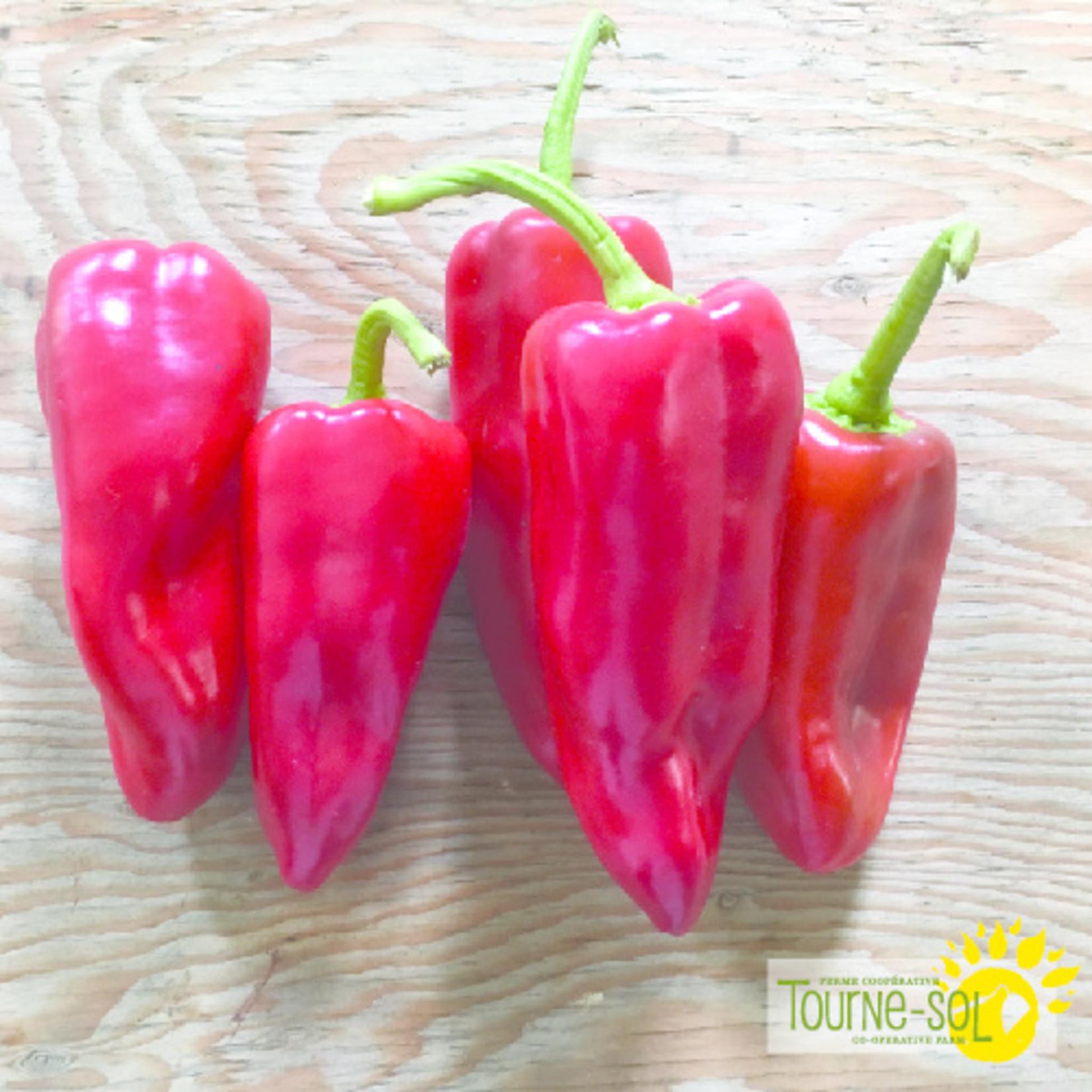 Tourne-Sol Karma red sweet pepper