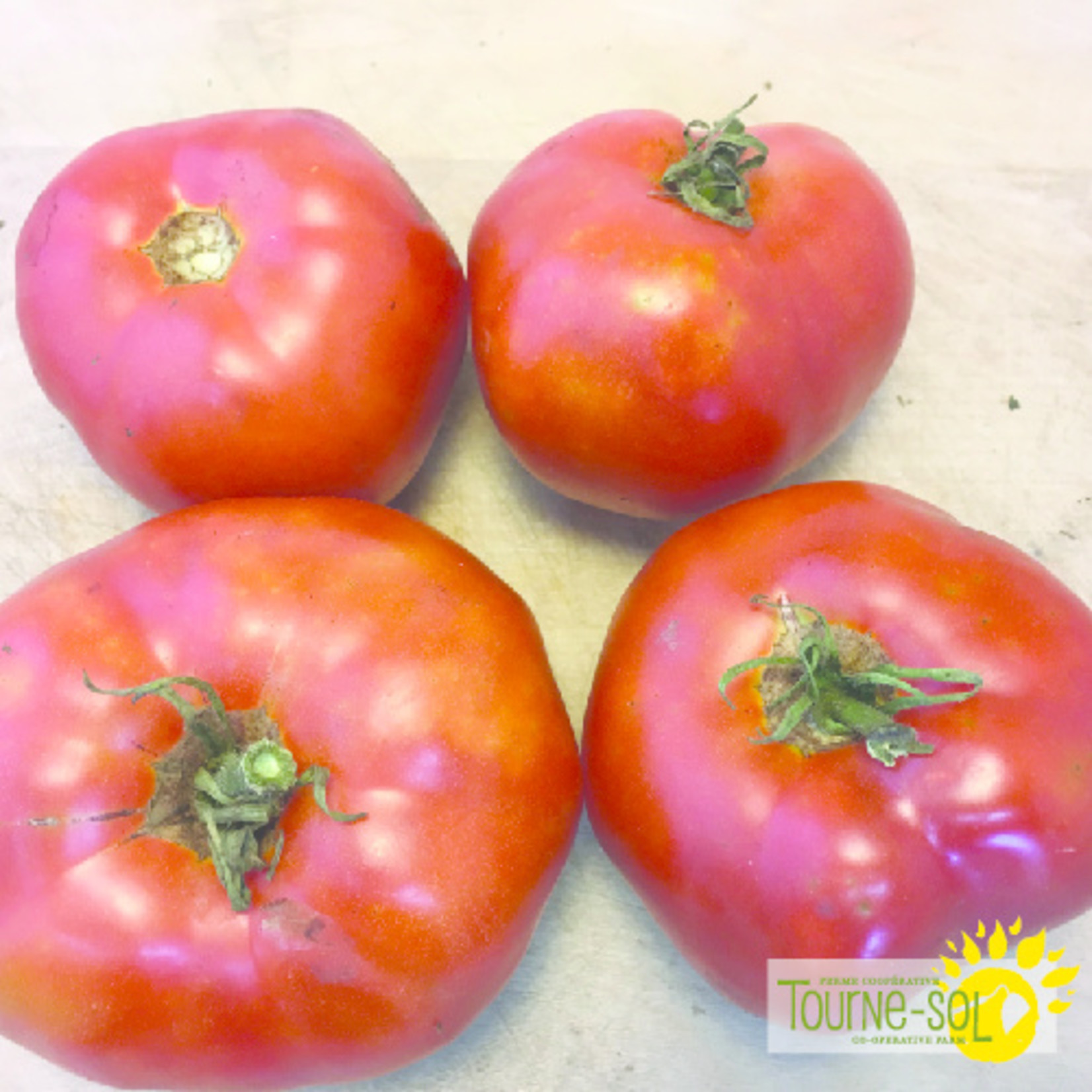 Tourne-Sol Tomate Rouge Moskvich