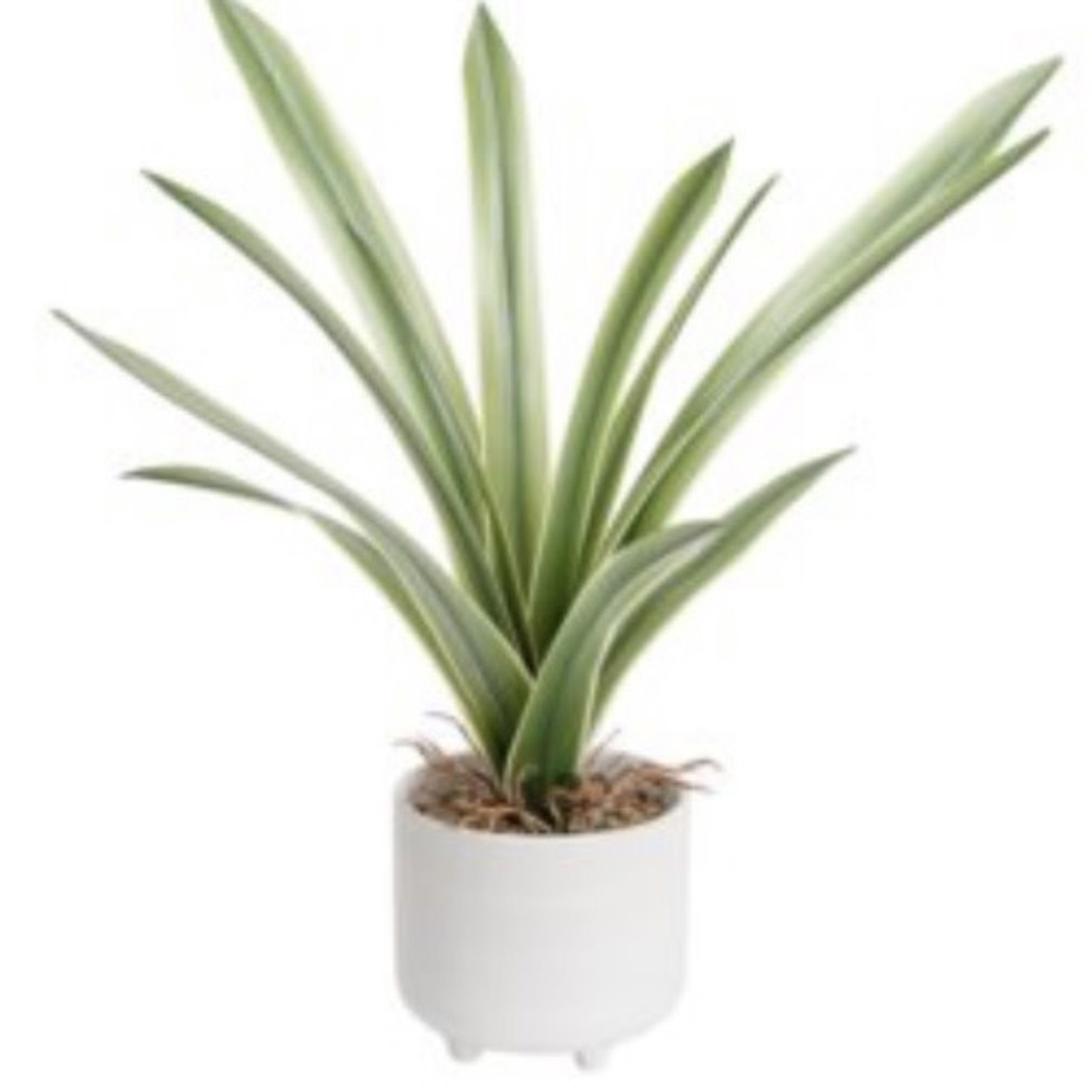 Torre & Tagus Riviera Ceramic Potted Leaf Plant