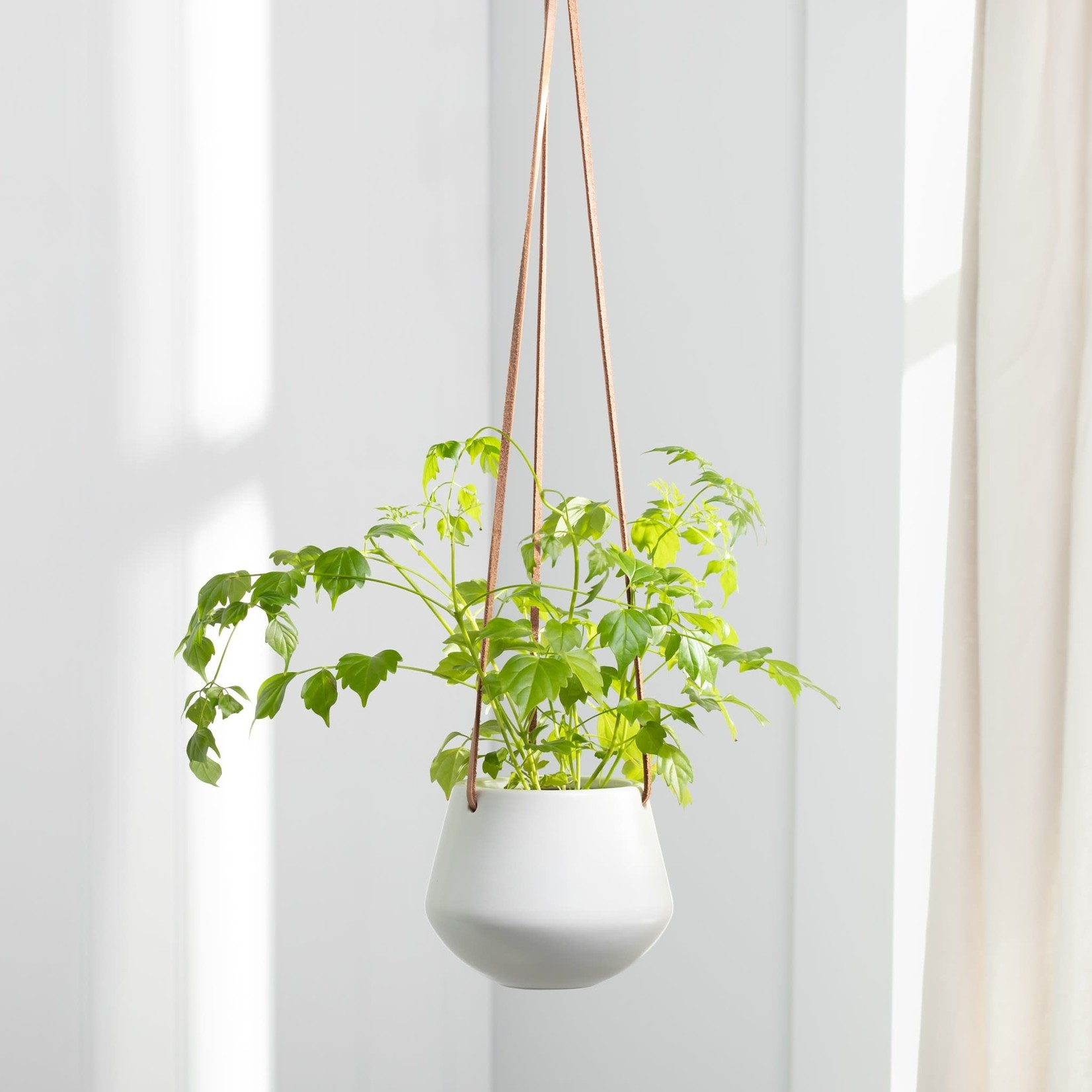 Torre & Tagus Ashbury Leather Hanging Planter - White