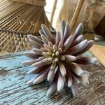 Indaba Fuzzy Succulent