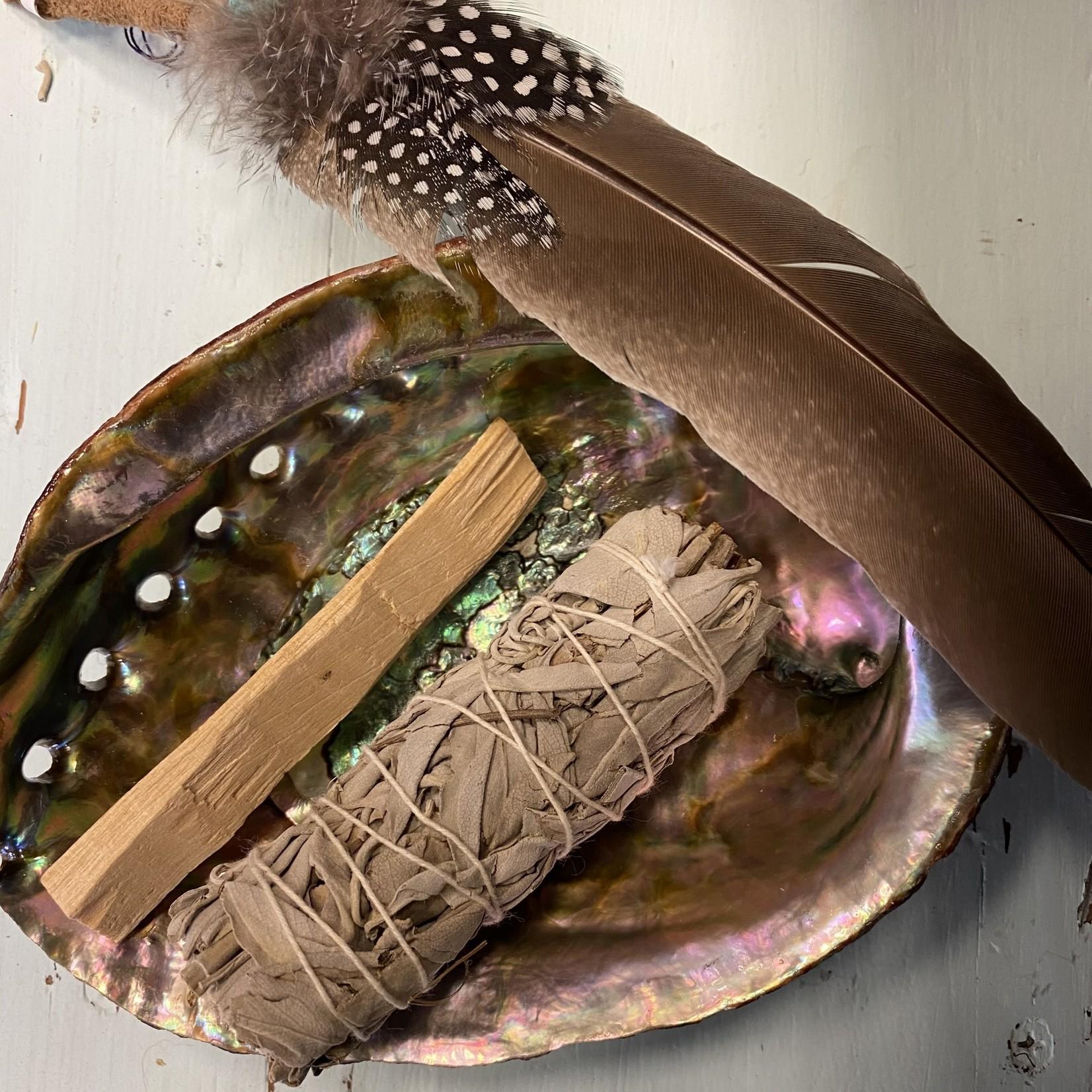 Designs by Deekay Designs by Deekay   Abalone shells