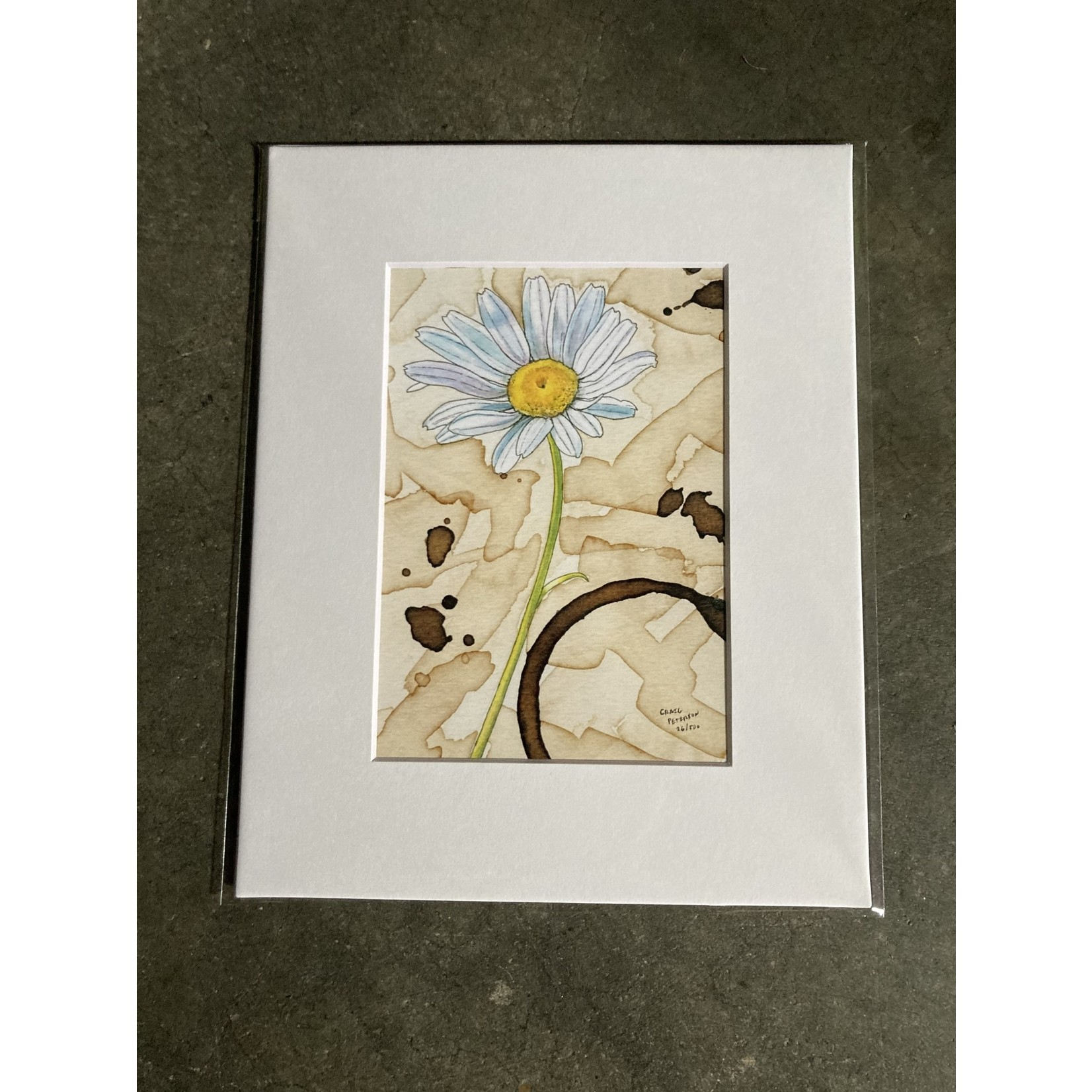 Craig Peterson Craig Peterson   Daisy coffee stain watercolor