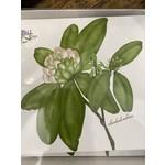 Bebe Blu Designs Bebe Blu Designs 8 notecards a envelope Rhododendrons