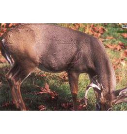 Martin Grazing Whitetail Deer Group 2 Target