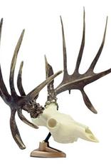 Big Rack Raxx Whitetail Figurine