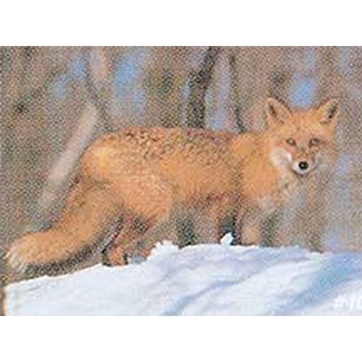 Delta Delta #107 Red Fox Target