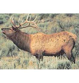 Delta Delta #110 Elk Target
