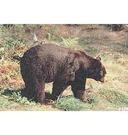 Delta Delta #104 Black Bear Target