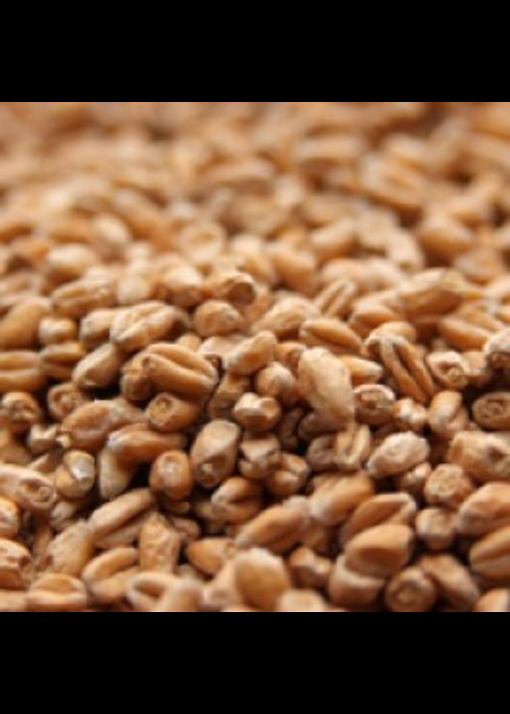 Grain Avangard Malz Premium Wheat Malt - A4 - 1 LB