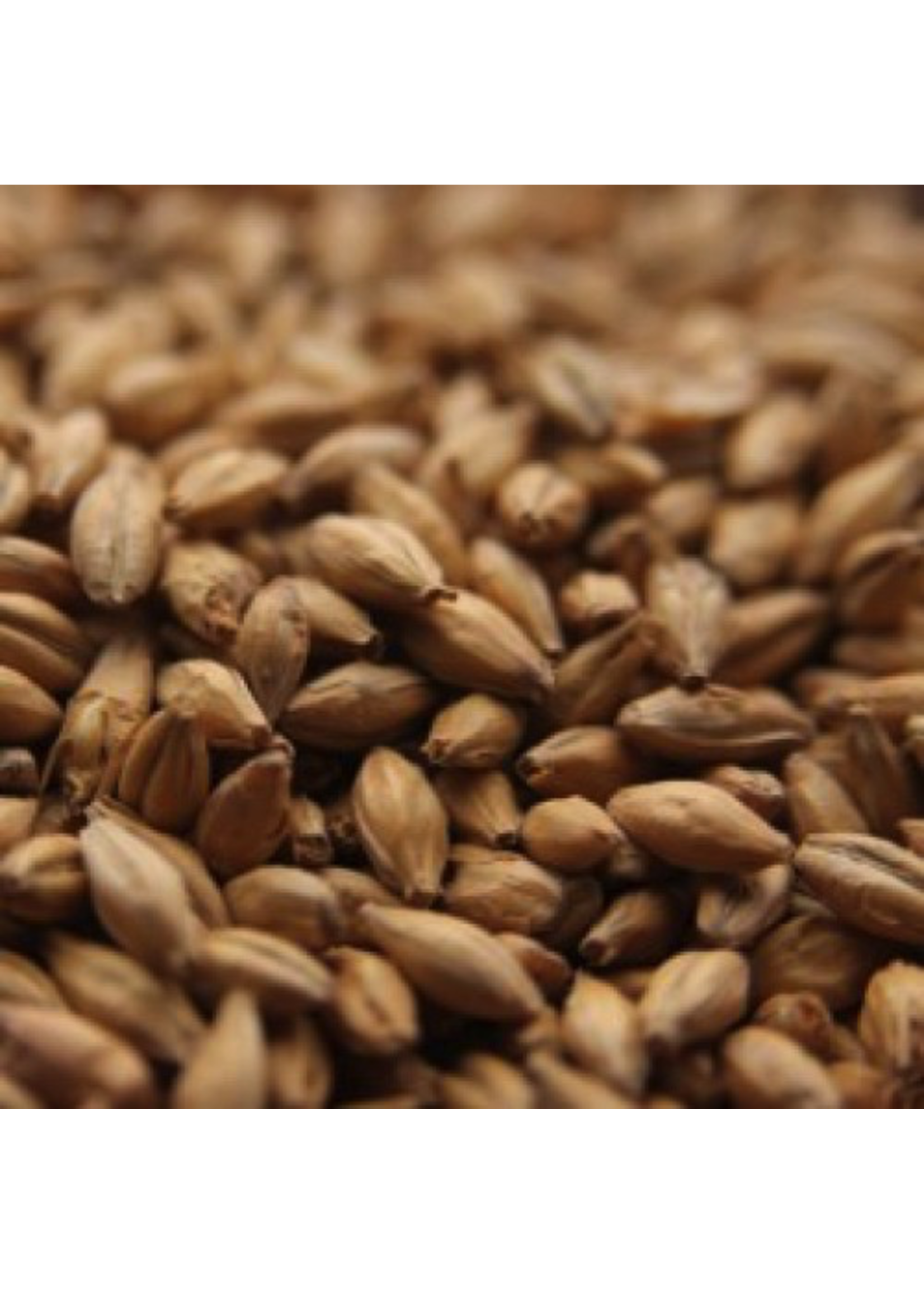 Grain Avangard Malz Premium Pale Ale Malt - A3 - 1 LB