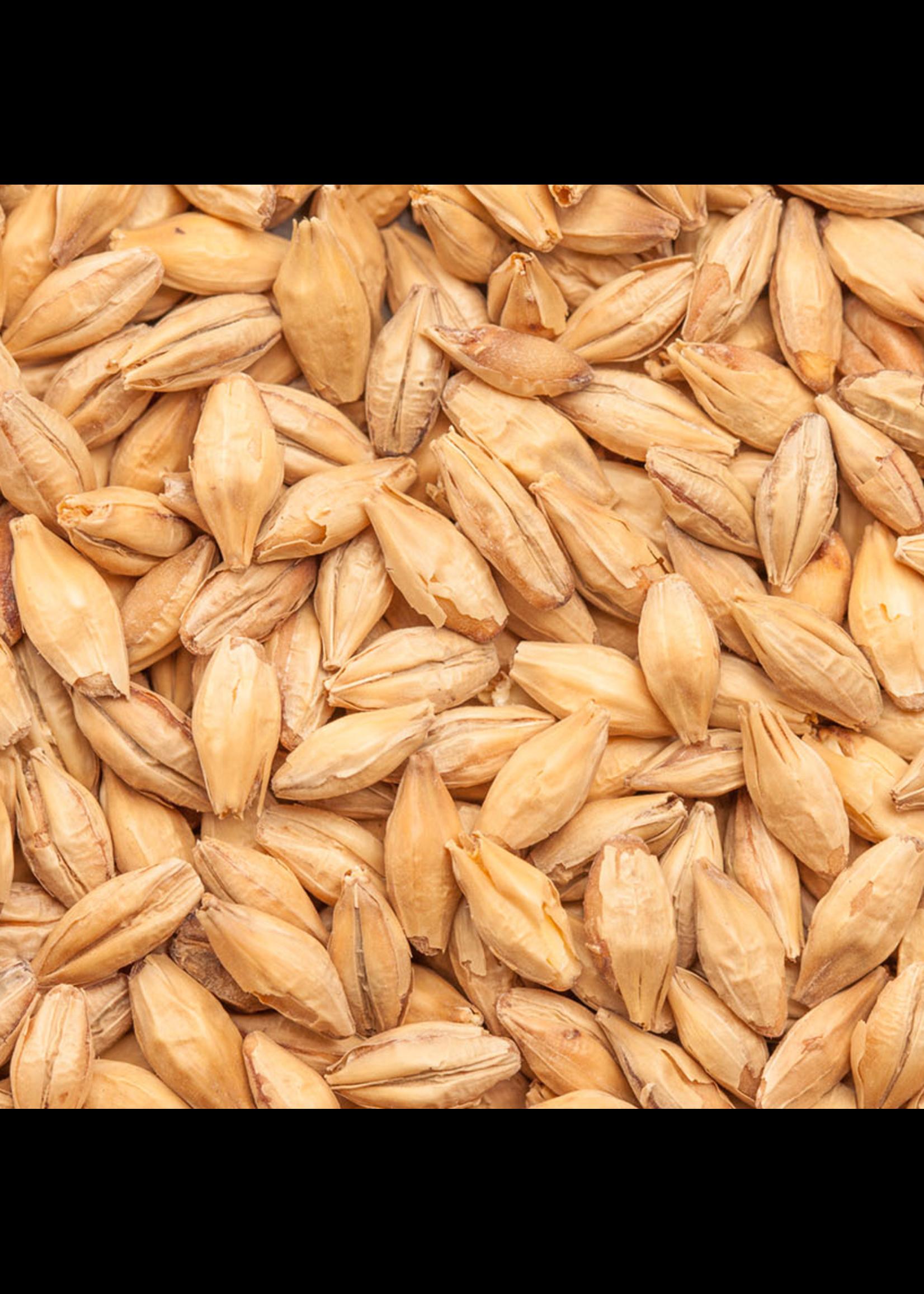 Grain Best Malz Chit Malt - F9 - 1 LB