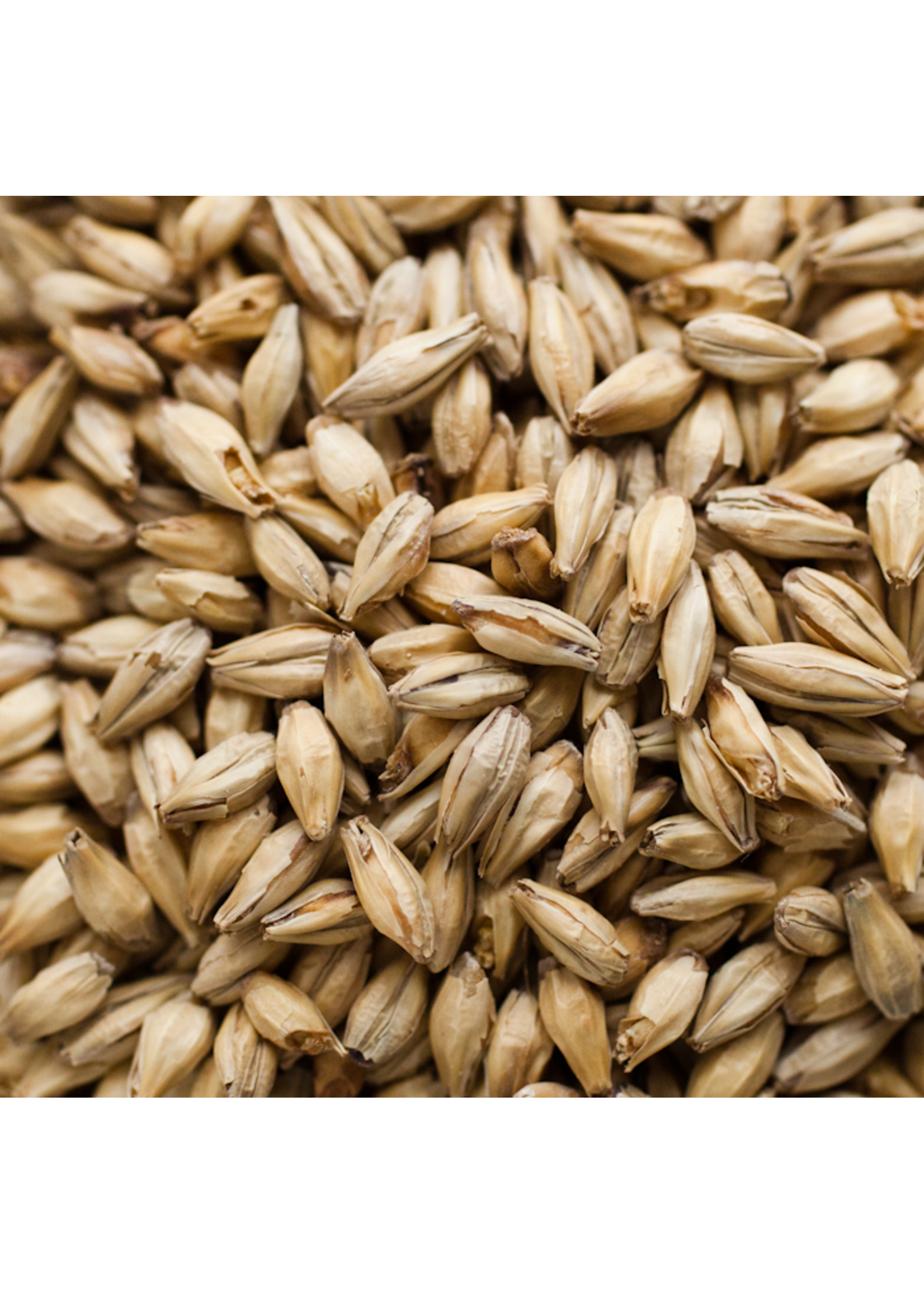 Grain Briess Caramel Vienne Malt 20L - C47 - 1 LB