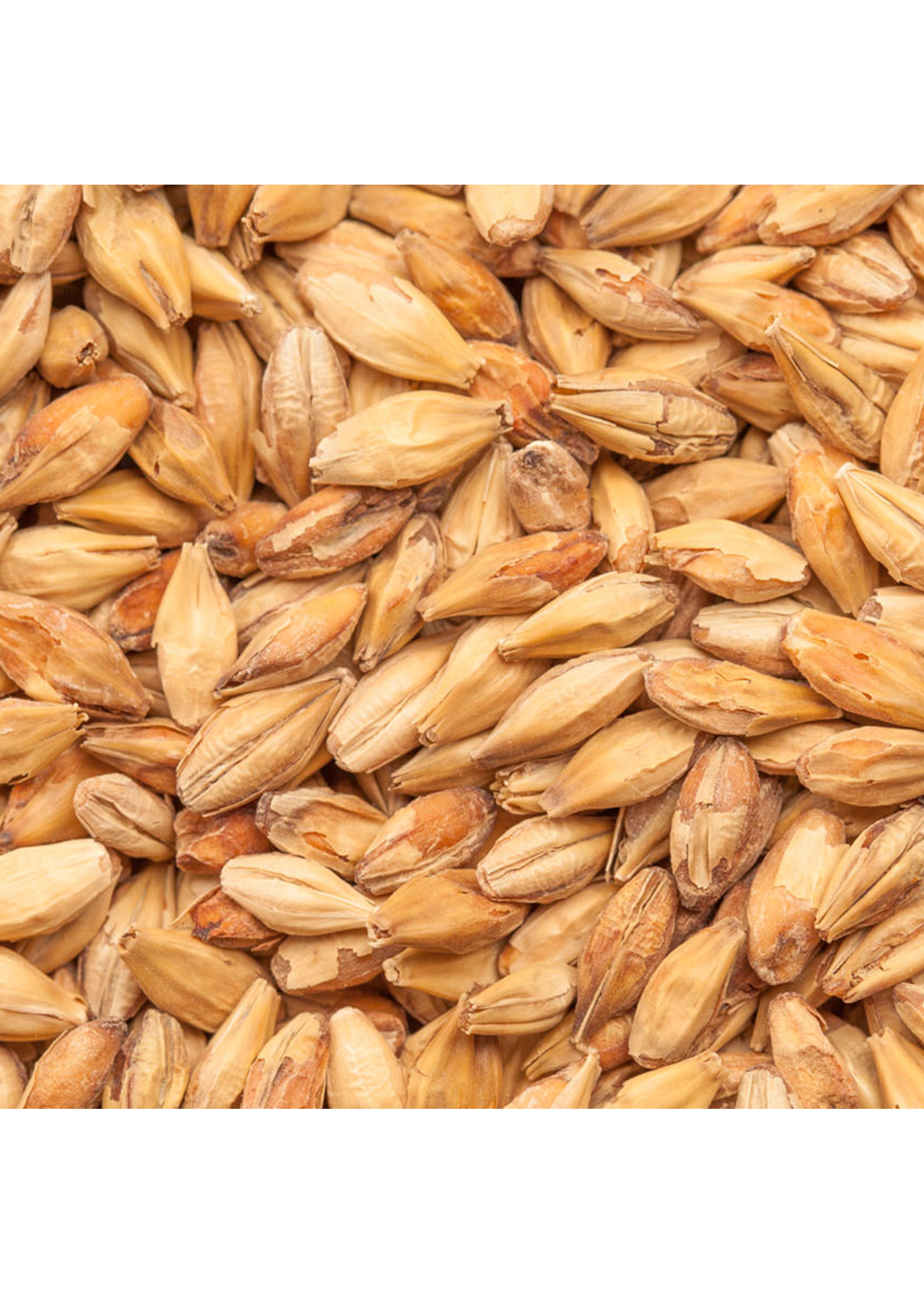 Grain Best Malz Caramel Aromatic Malt - F5 - 1 LB