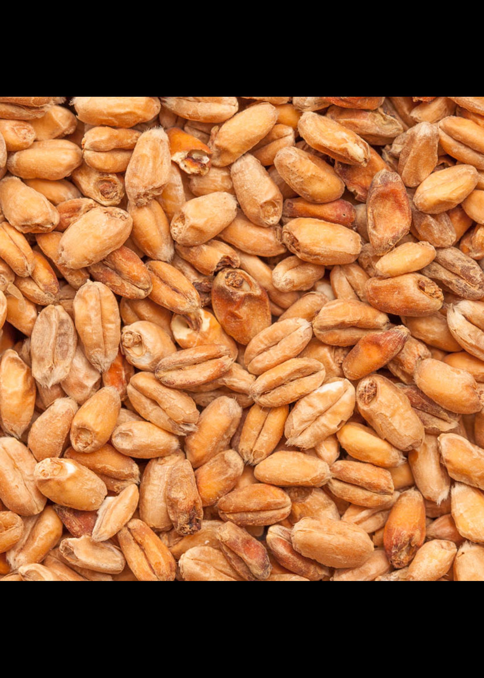 Grain Best Malz Dark Wheat Malt - F12 - 1 LB