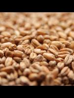 Grain Weyermann® CaraHell Malt - B8 - 1 LB