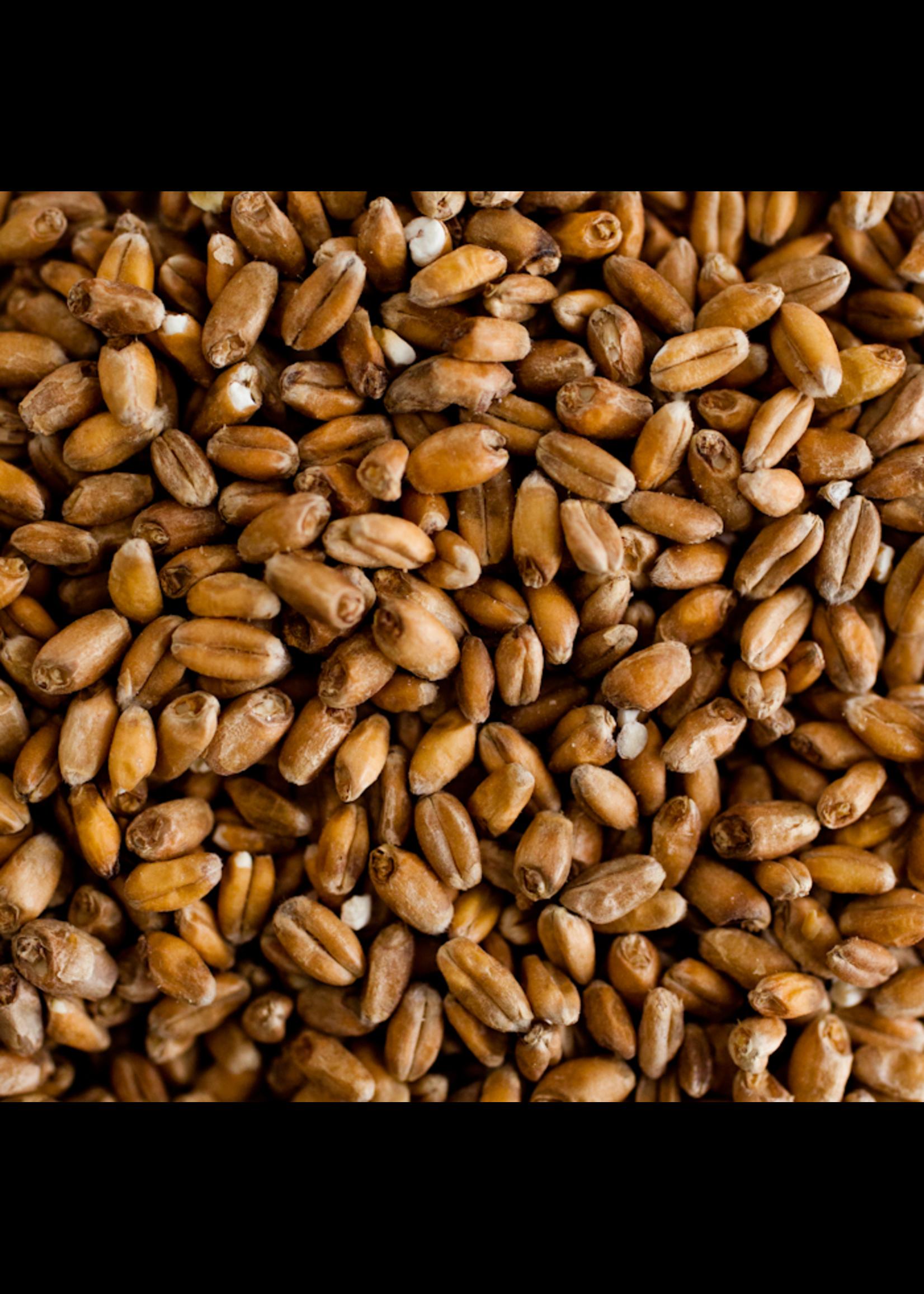 Grain Weyermann® Dark Wheat Malt - 10 LB