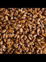 Grain Rahr Unmalted Wheat - A39- 1 LB