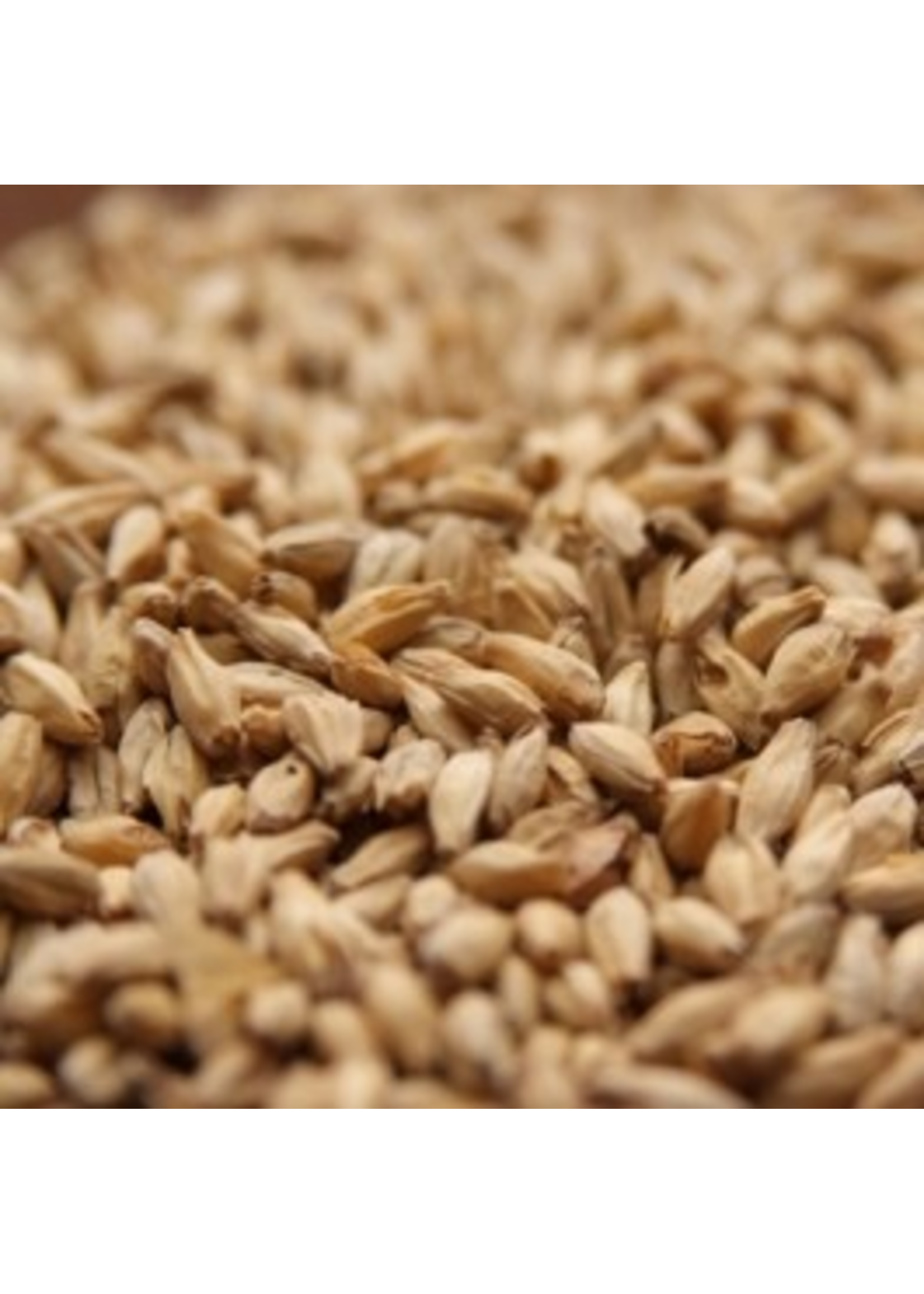 Grain Rahr 6-Row Brewers Malt - 10 LB