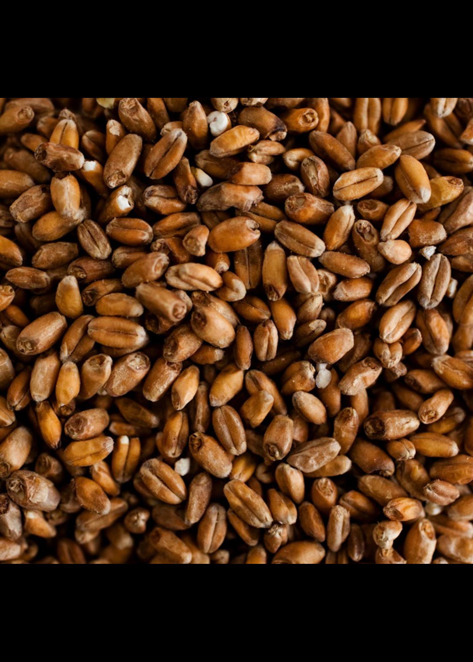Grain Weyermann® Spelt Malt  - E4 - 1 LB