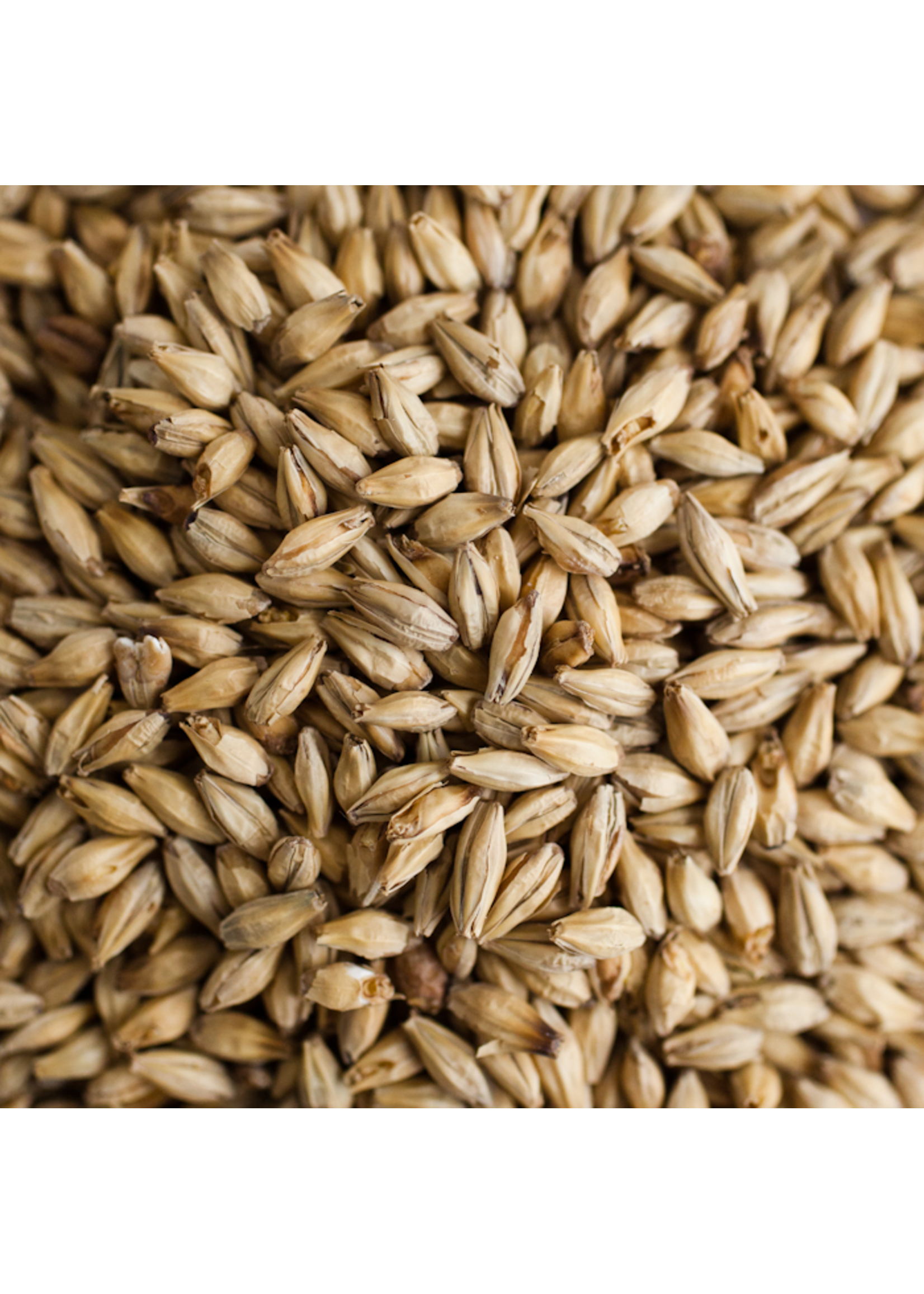 Grain Avangard Malz Premium 2-Row Malt - 55 LB