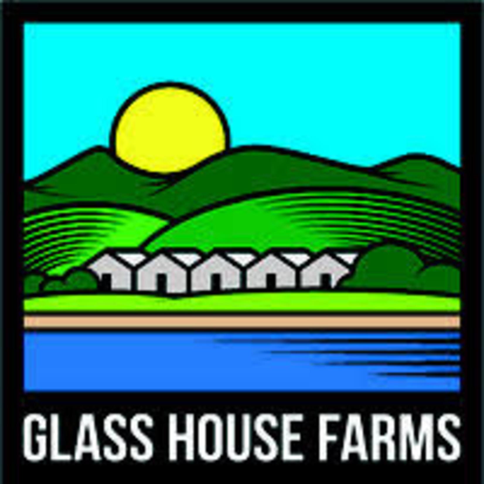 Glass House / GG #4