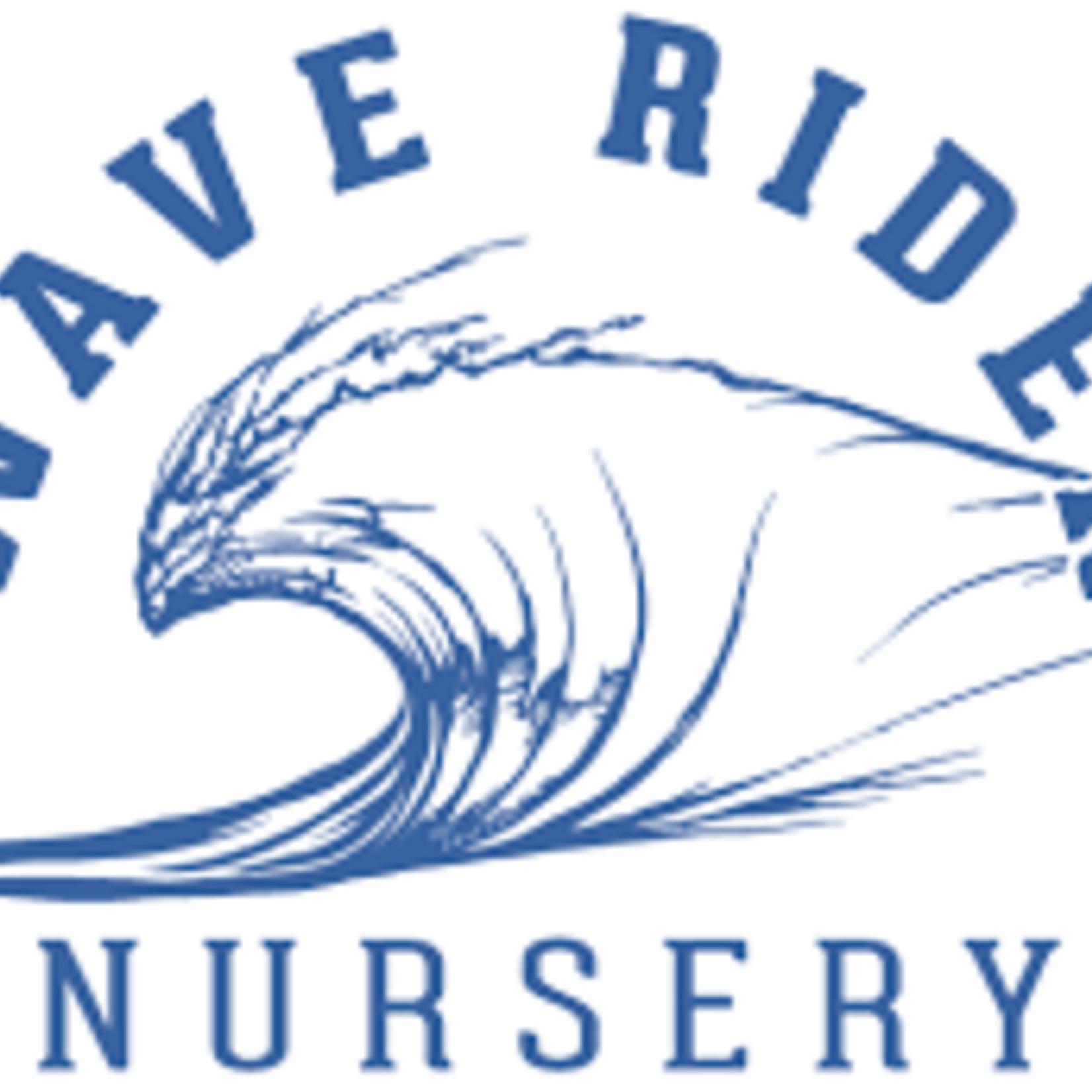 Wave Rider Wave Rider - Collie Man Kush preroll
