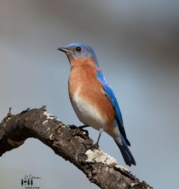 Art Blue Bird Print