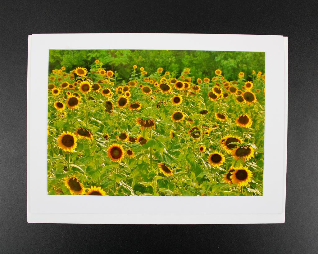 "Art Greeting Card by Craig Johnson ""Make You Smile"""