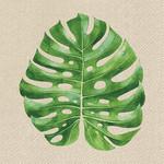 Abbott Monsterra Leaf Napkins - 20 pack