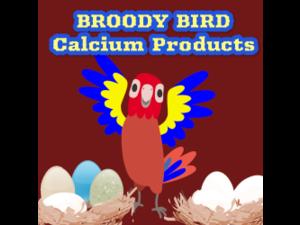 Broody Bird