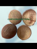 Coconut Half Shells