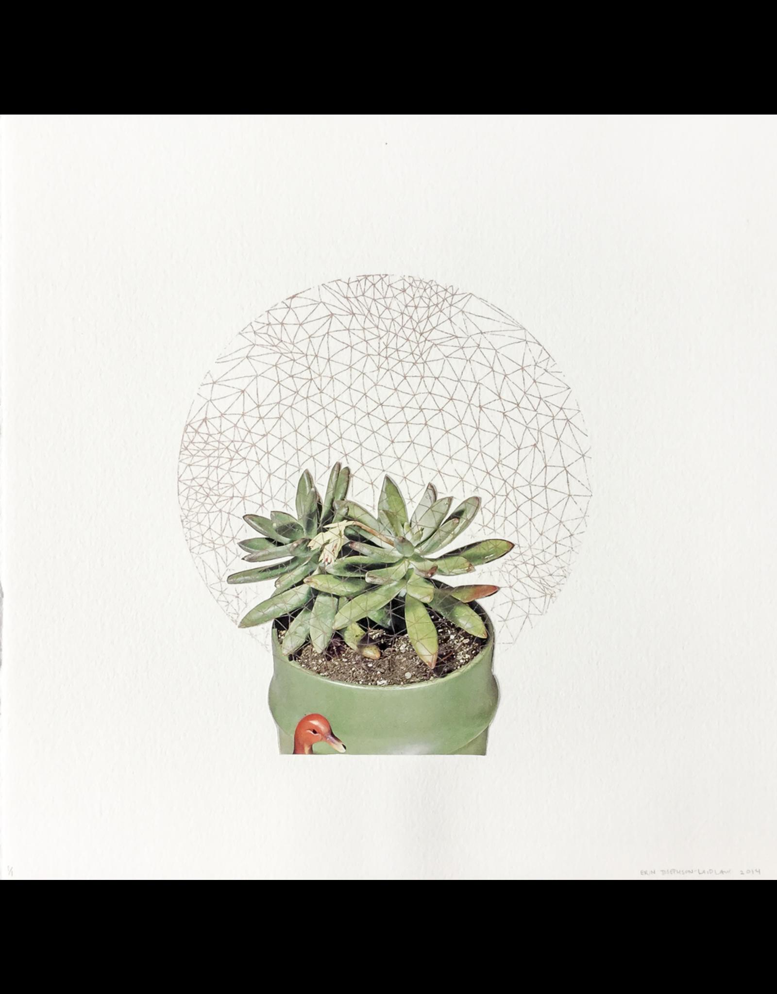 Josephson-Laidlaw, Erin Succulents, Erin Josephson-Laidlaw