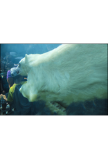 LeBlanc, Marie Polar Bear, Marie LeBlanc