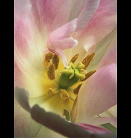 Reichert, Don untitled (flower), Don Reichert