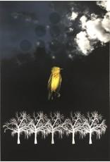 Benesiinaabandan, Scott Yellow Bird/osaawaa behnesii, Scott Benesiinabandan