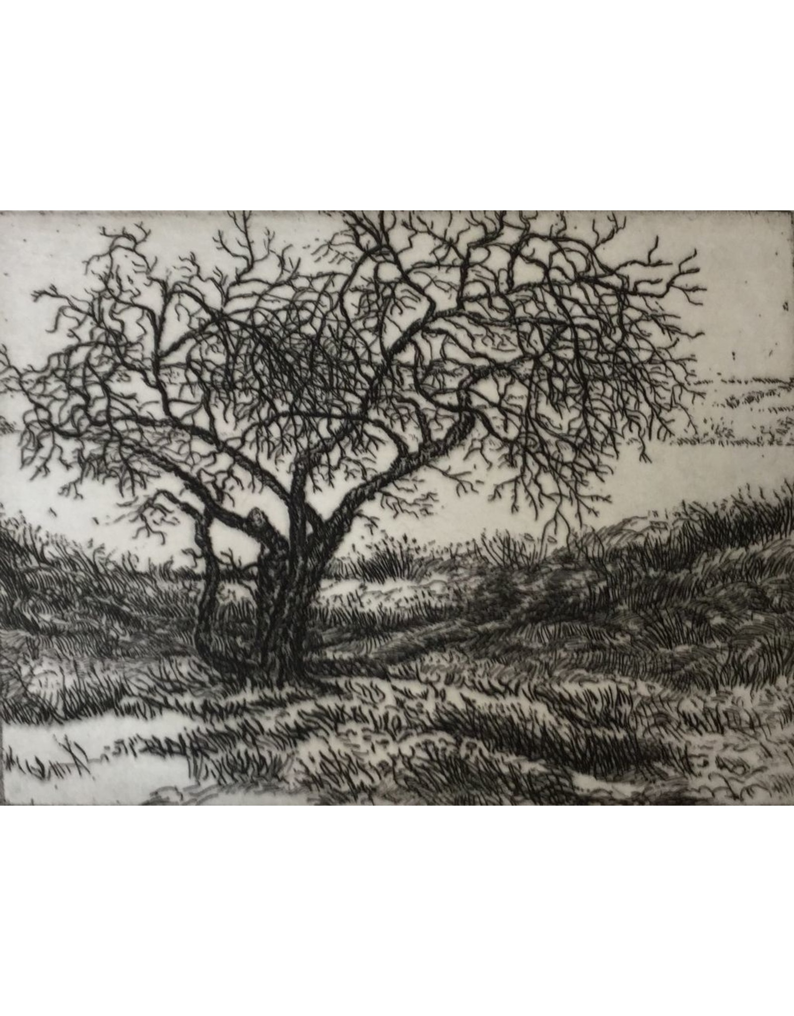 Simoens, Leo Old Apple Tree, Leo Simoens