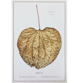 Holden, Richard No. 27 Leaf, Richard Holden