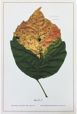 Holden, Richard No. 37 Leaf, Richard Holden