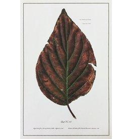 Holden, Richard No. 68 Leaf, Richard Holden